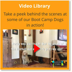 Video Library Take a peek behind the scenes at some of our Boot Camp Dogs  in action!